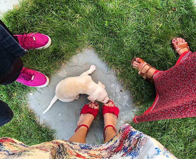 Puppy kisses. 😍🐶 And shoe dreams. http://liketk.it/2EGku @liketoknow.it #liketkit #trustyourcloset #LTKshoecrush #fwis #targetstyle #kcblogger