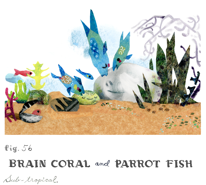 braincoralparrotfish.jpg