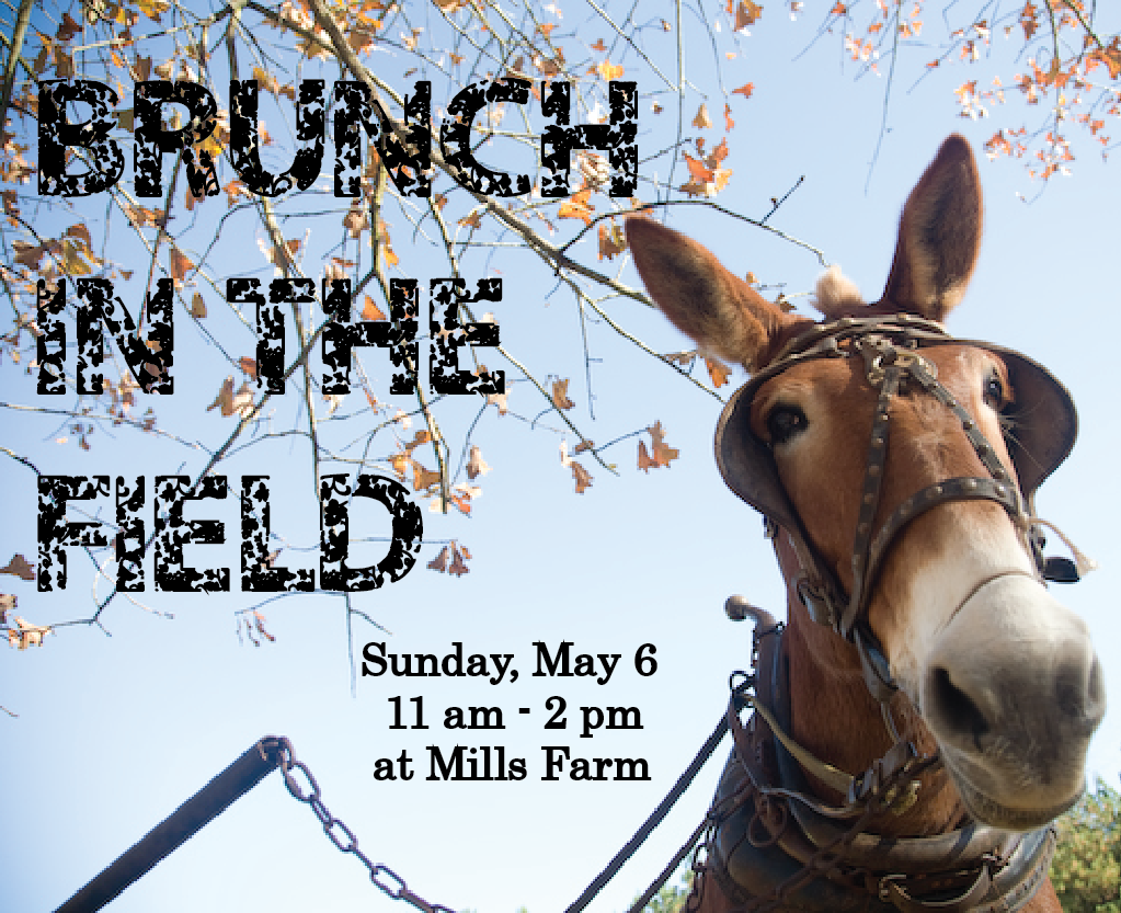 Presented by the Classic City Cooks and Chefs Association and Mills Farm – Home of Red Mule Grits      Sunday, May 6  11 am - 2 pm  at Mills Farm     Enjoy live music, crafts, fellowship and fun!   Brunch will be prepared by seven of Athens top chefs, each dish featuring Mills Farm fresh-ground products.     Tickets are $10.00  Save $2 when you bring a canned food donation for Project Safe    No reservations are needed.   For more information call 706-543-8113 or   email redmulegrits@yahoo.com     Mills Farm  150 Harve Mathis Rd.  Athens, Ga. 30601