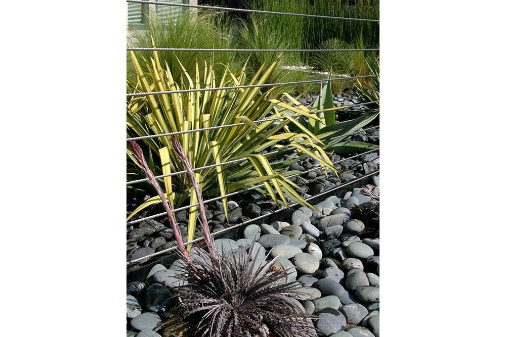 ZFREEDMAN_contemporary_venice_plants_cu.jpg