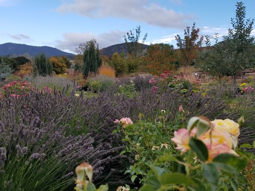 orchard+roses+and+grasses_102017.jpg