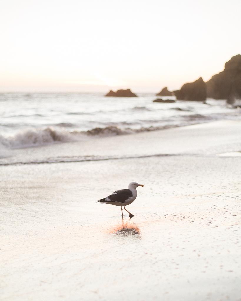 El-Metador-Beach-Engagement-Session-in-Malibu-22.jpg