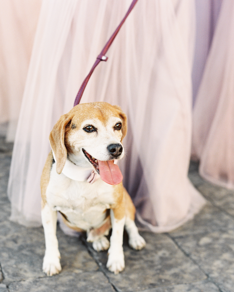 Dog Bearer MRO Luxe Wedding
