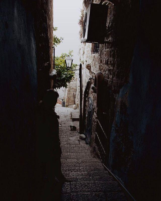 Magical cat alleys.
