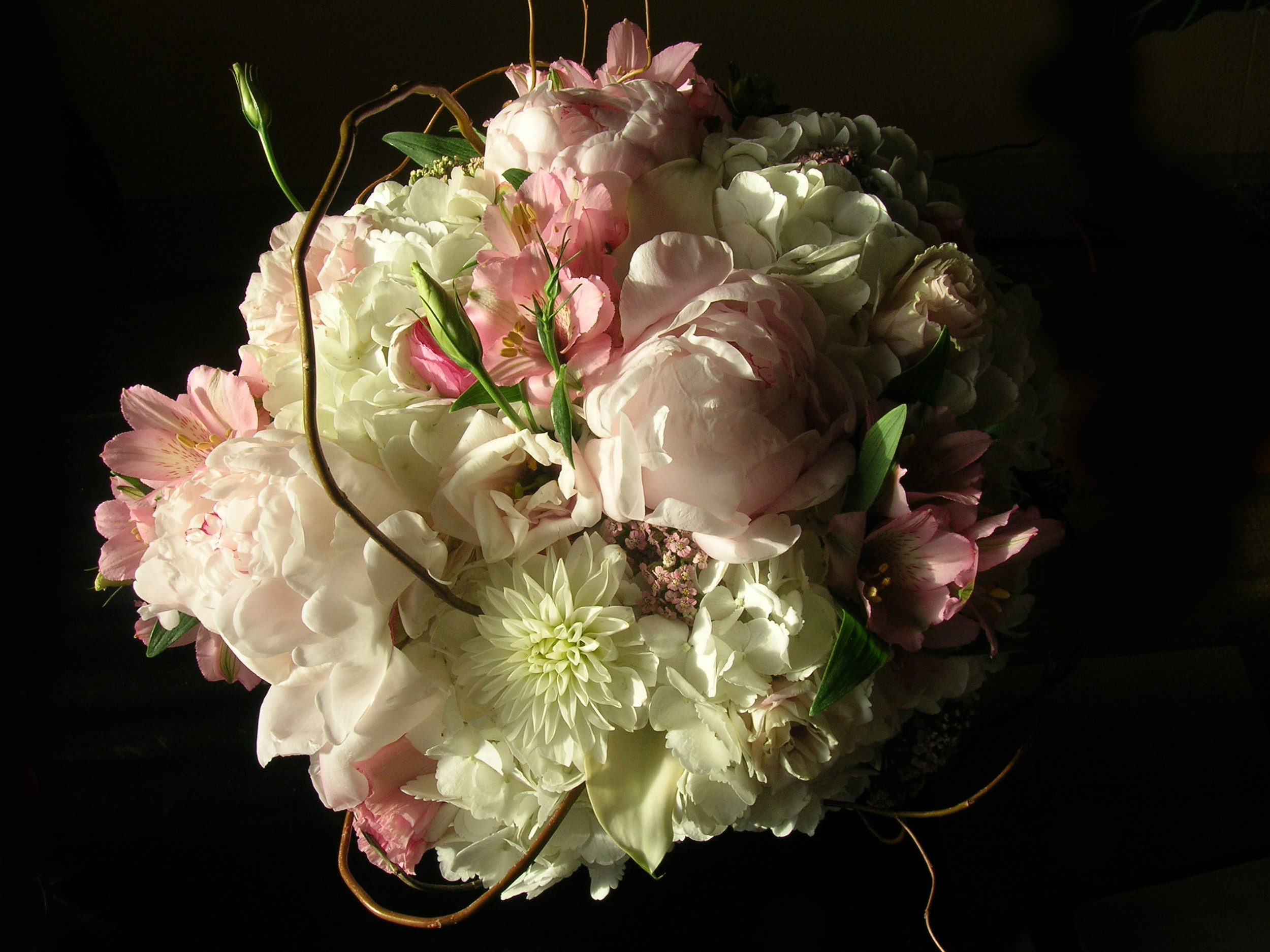 FlowerPhoto.jpg