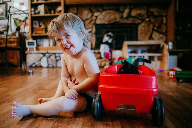 Me: Mav did you put the kitten in the wagon?  This was his response 🤣 . . . . #lovinreallife #kfoxphotos #kfoxphotography #crownpointindiana #northwestindiana #northwestindianaphotographer #documentaryphotography #documentyourdays #storiesoftheeveryday #childhoodunplugged #kidsforreal  #letthembelittle #kittensofinstagram