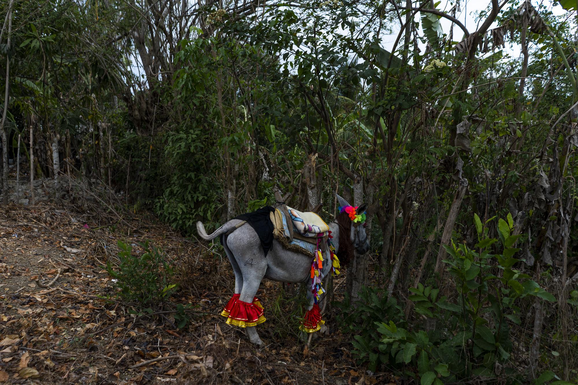 burro project-1.jpg