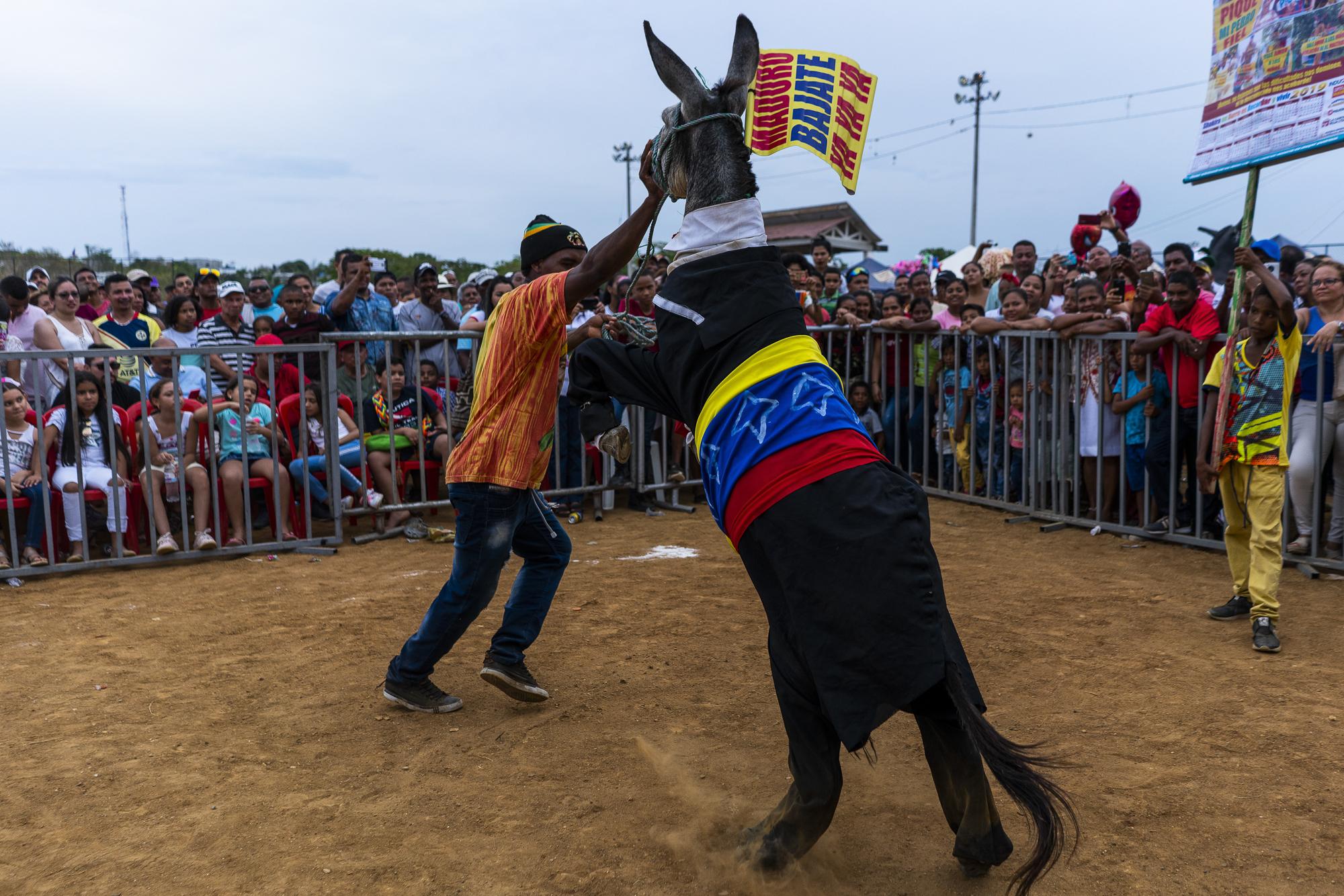 burro project-8.jpg