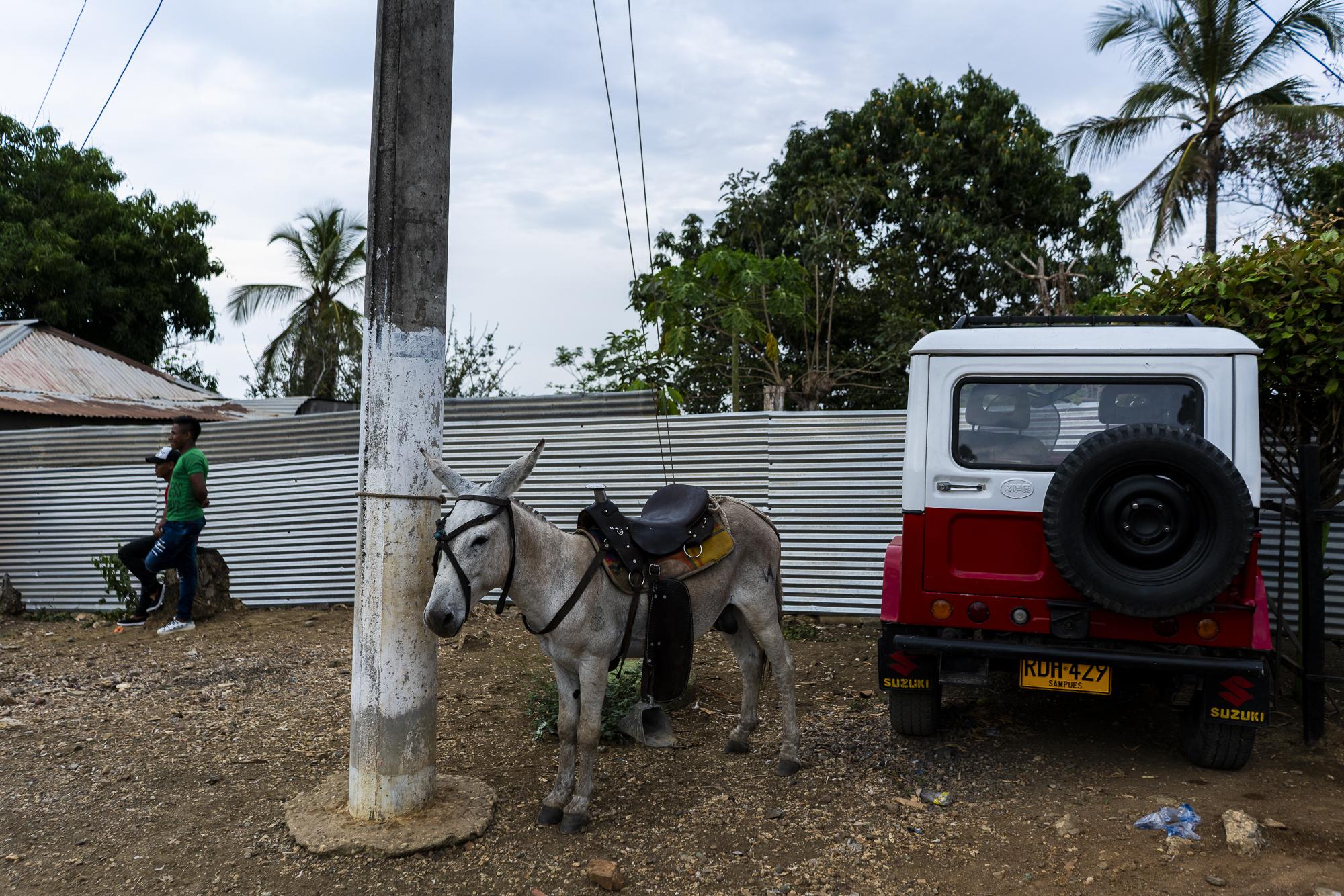 burro project-11.jpg