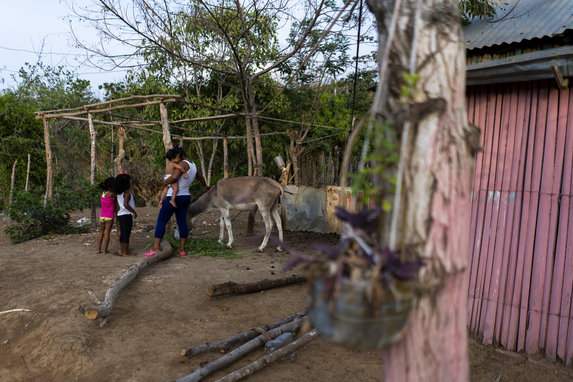 burro project-14.jpg