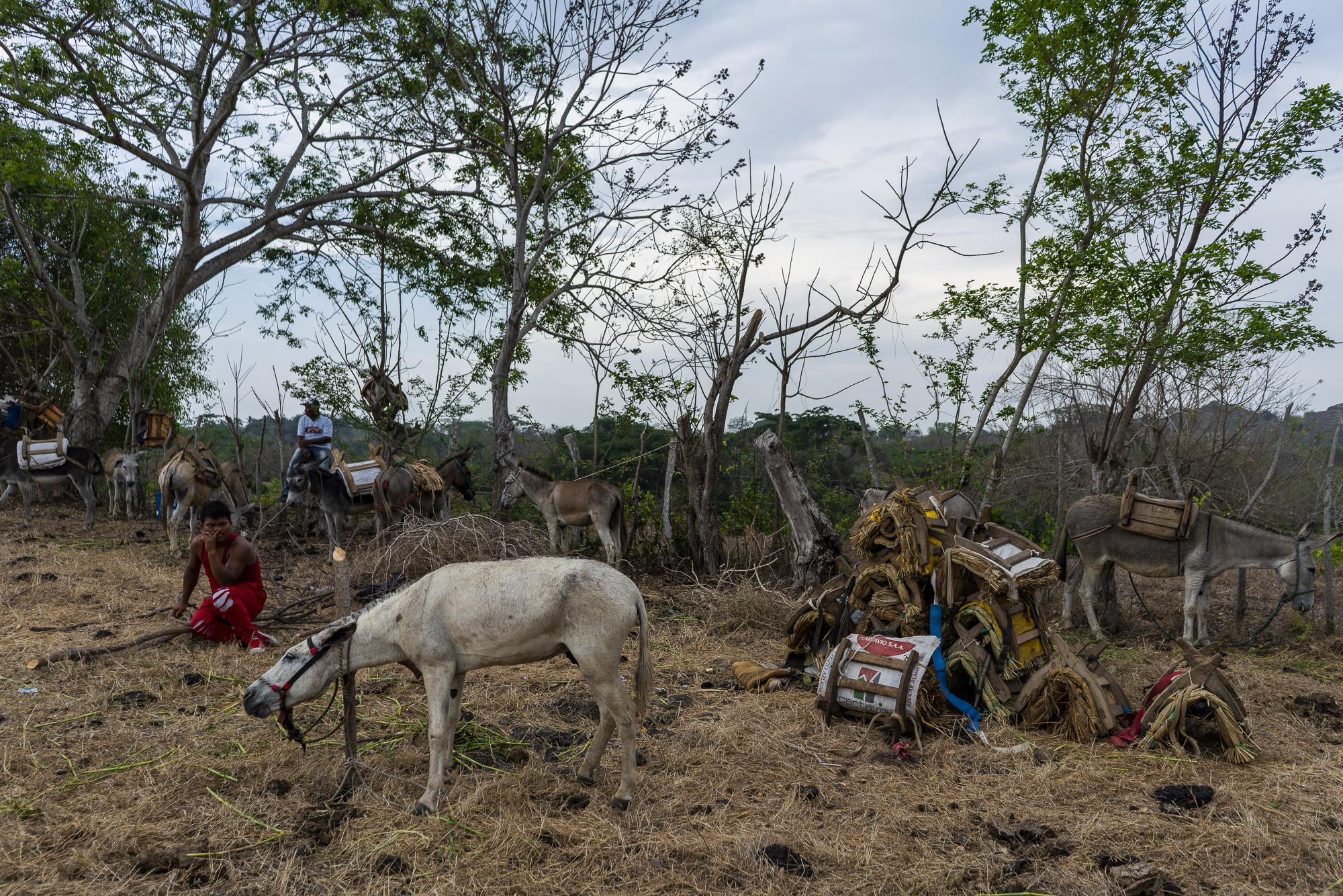burro project-25.jpg