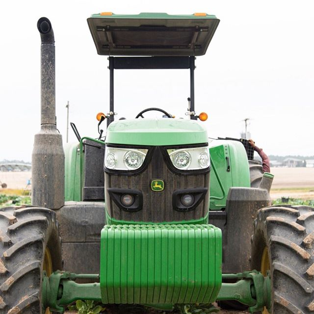 We recently spotted this Deere in our greens. 🚜 Thankfully she's a DIESEL-vore. 🤣 - Have a great weekend! ☀️ ⠀⠀⠀⠀⠀⠀⠀⠀⠀ #FarmFreshGreens #NaturesGreens . . . #johndeere #tractor #tractors #farm #farming #leafygreens #yourleafygreensguide #collardgreens #certifiedsc #farmfresh #agriculture #farmpuns #puns #farmjokes #dadjokes #punny #farmtotable #fieldtofork #fresh #wholesome #freshmatters #eatmoreplants #haveaplant #realcolumbiasc #colatoday #scfarmbureau #unitedfresh #seproducecouncil