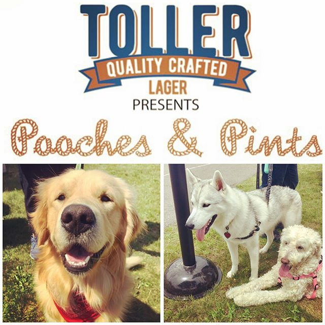 We wanted to thank all the owners and pooches for coming out to the first ever Pooches & Pints yesterday 🍻🙌🏻🐶! We were so happy to see the community rally their pups and come out to support an amazing cause @novascotiaspca ❤️. Stay tuned for the total amount raised yesterday from the event which will be tallied tomorrow 👍🏻. These are just a few snapshots of all the adorable doggos that came out (and their owners) 😝💕🐶 • • • • #poochesandpints #spindriftbrewing #pupsofinstagram #doggostagram #nscraftbeer #fundraiser #brewerytown #puppylove #mustlovedogs #dogfriendlybrewery #prettypups #justaperfectday