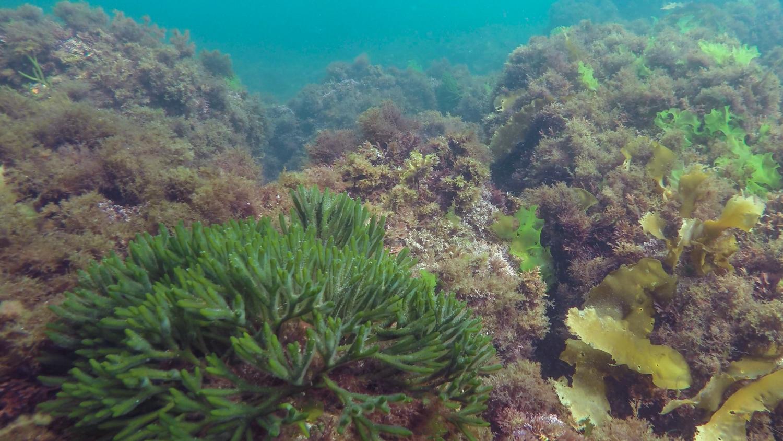seaweed4.jpg