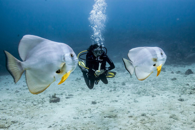 Nosy batfish