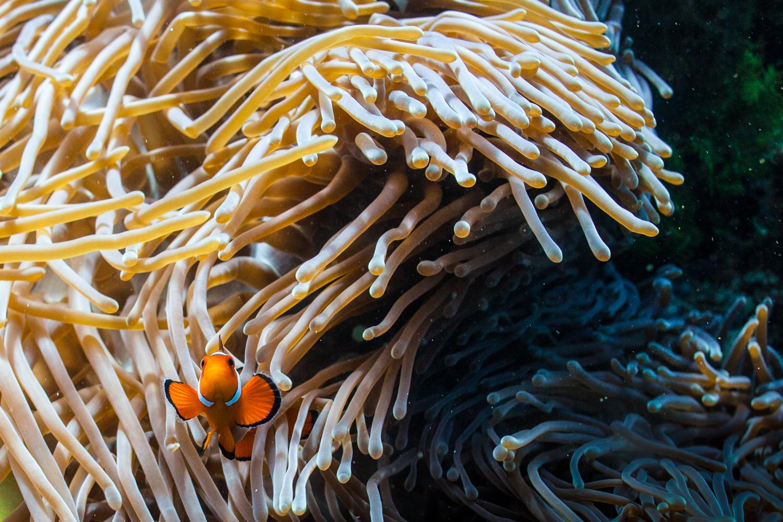 under the sea -