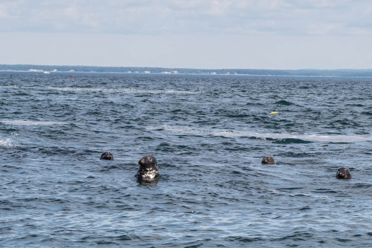 just some seals eager to see us!