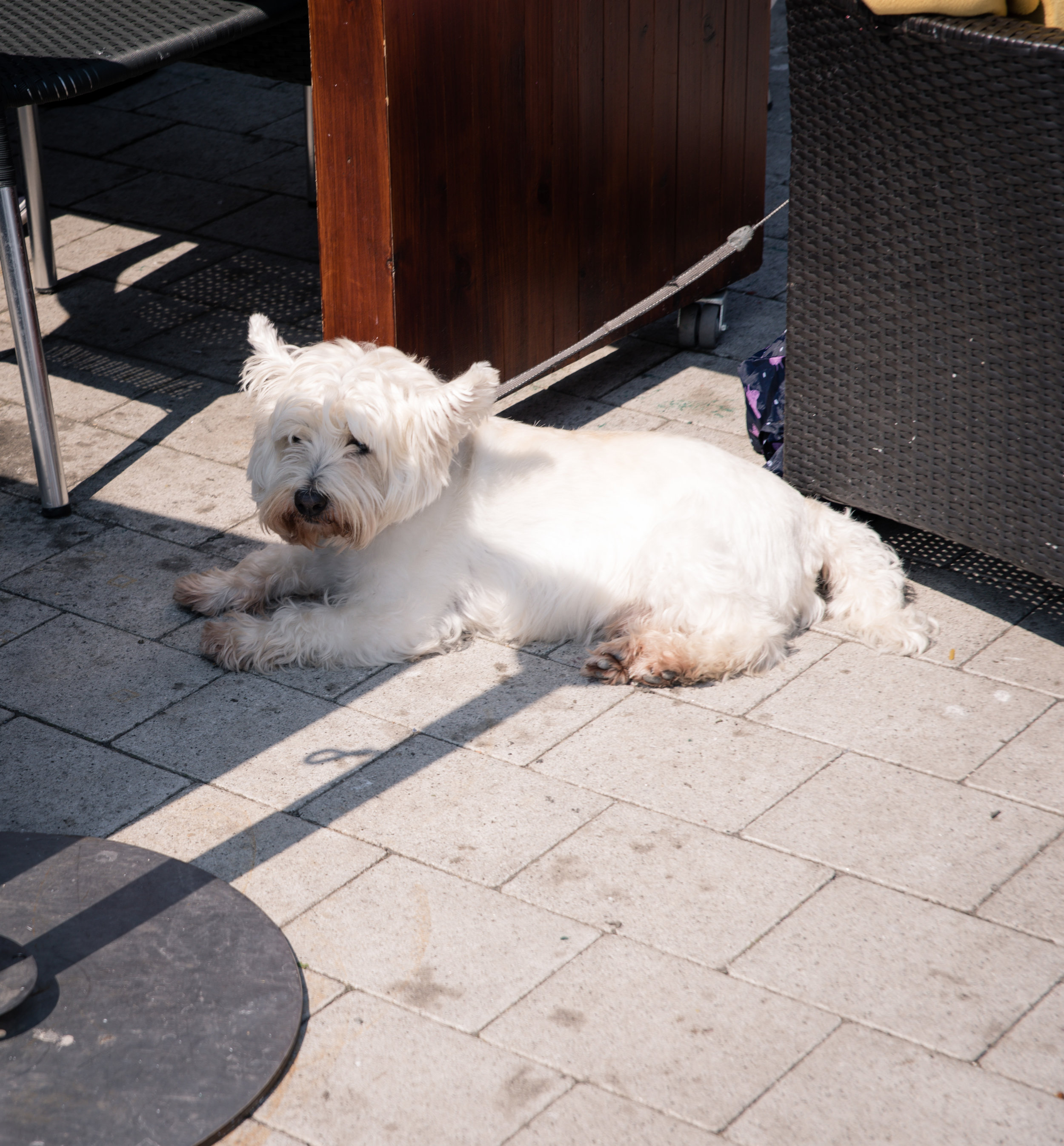 A dog sitting beside its family at a restuarant.