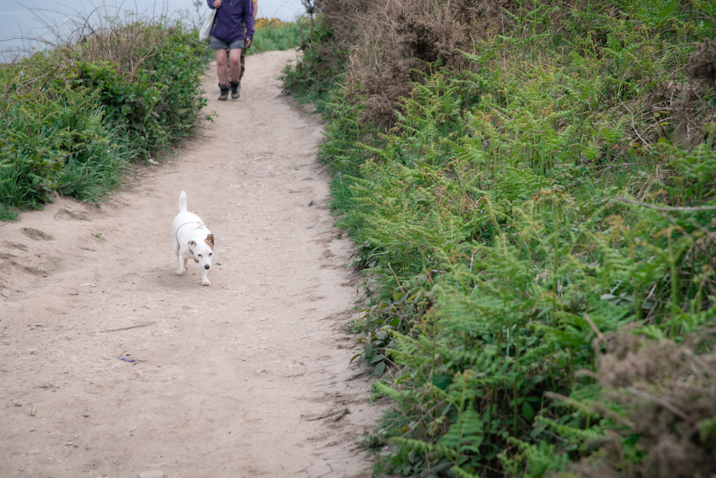 Dogs often went without leashes.