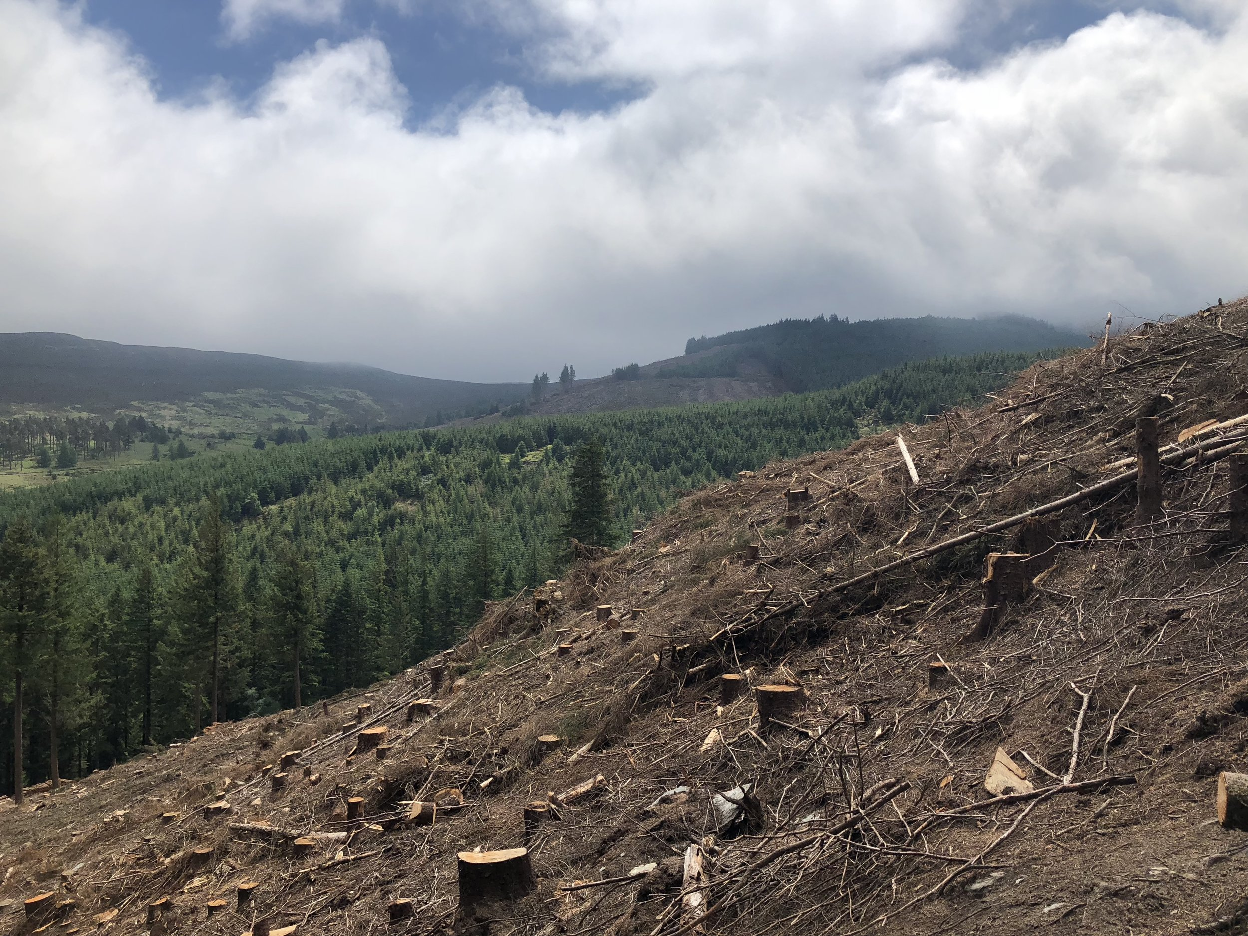 It was sad to see so many trees cleared.