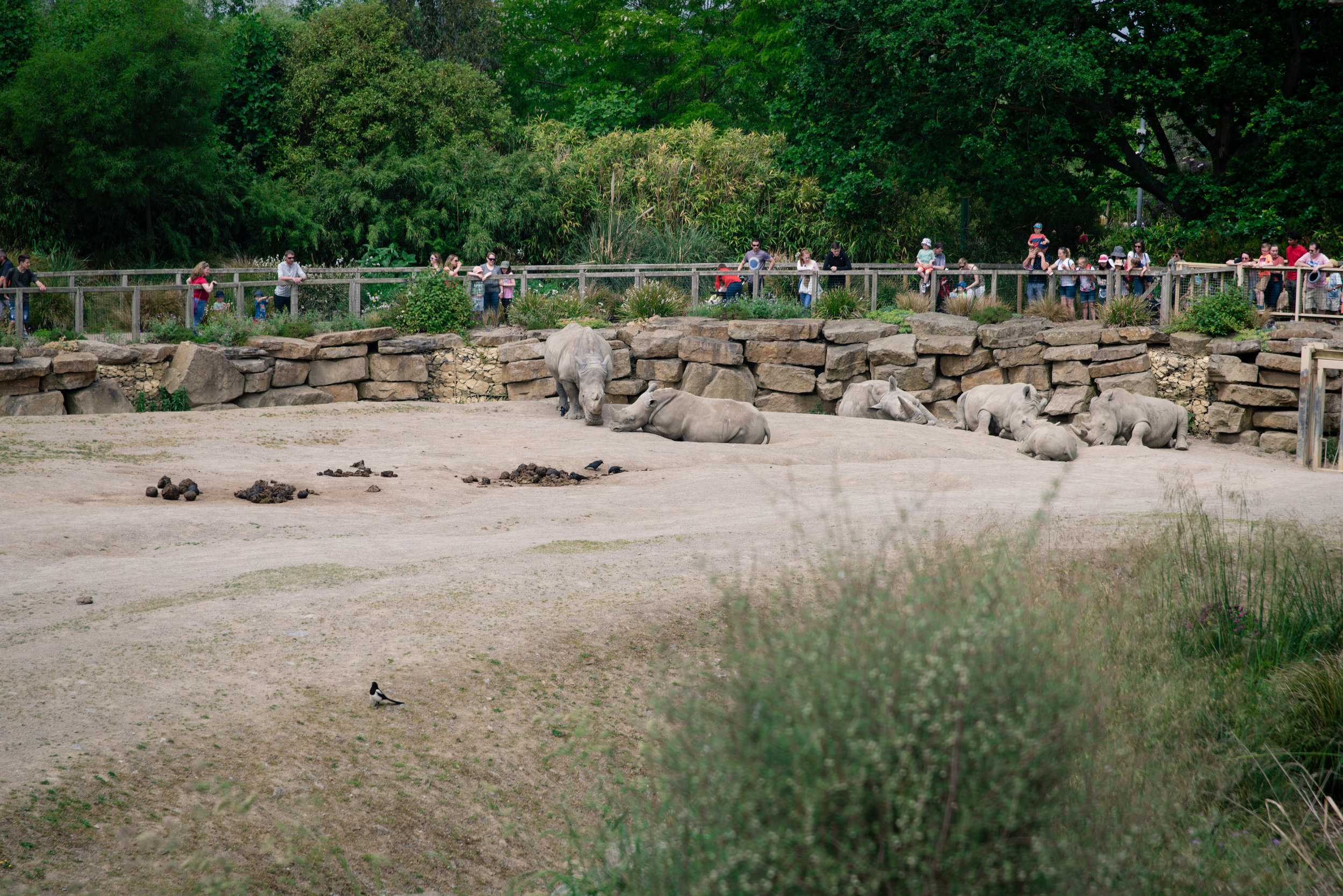 The Rinos were all snoozing as I walked around the enclosure.