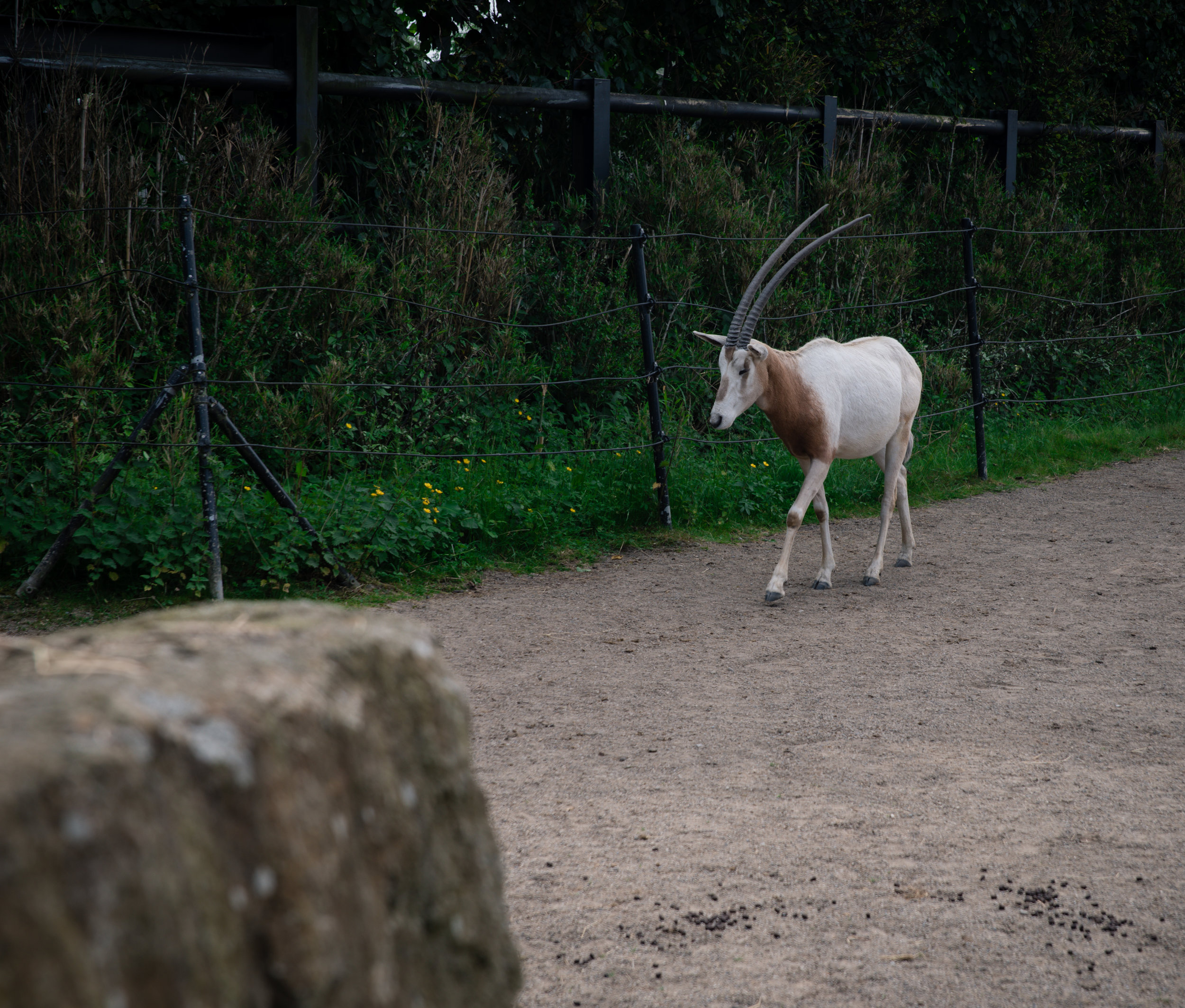 Oryx!