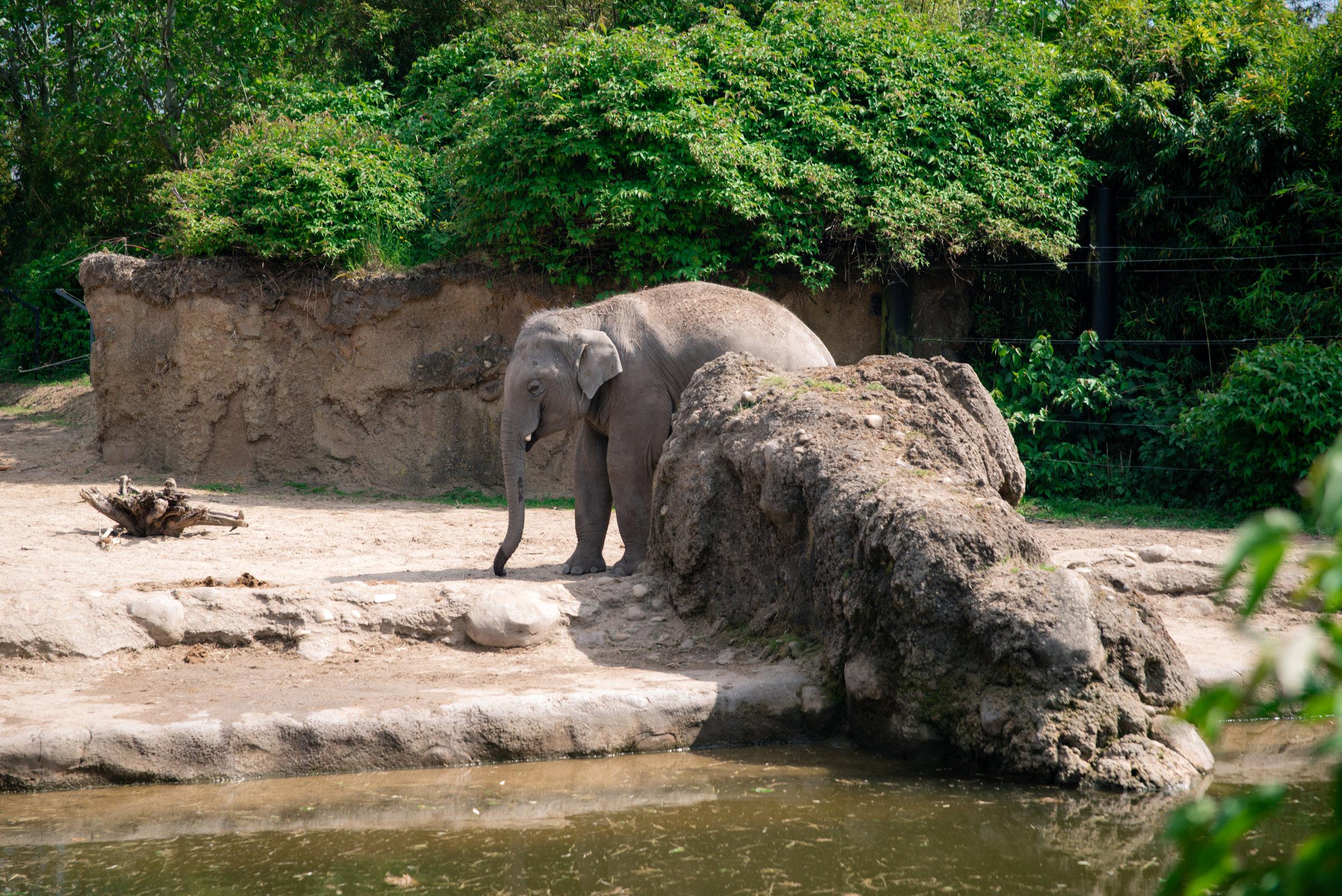 And finally the Elephants!