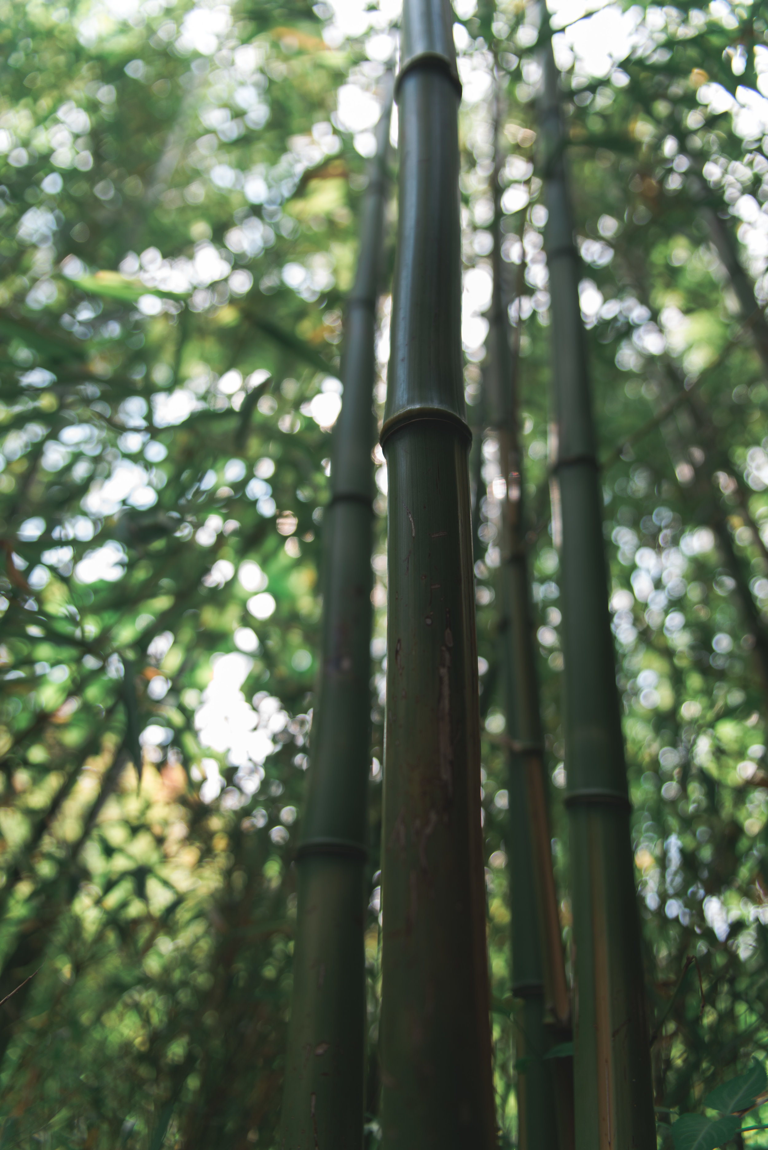 Bamboo forest on the way out!