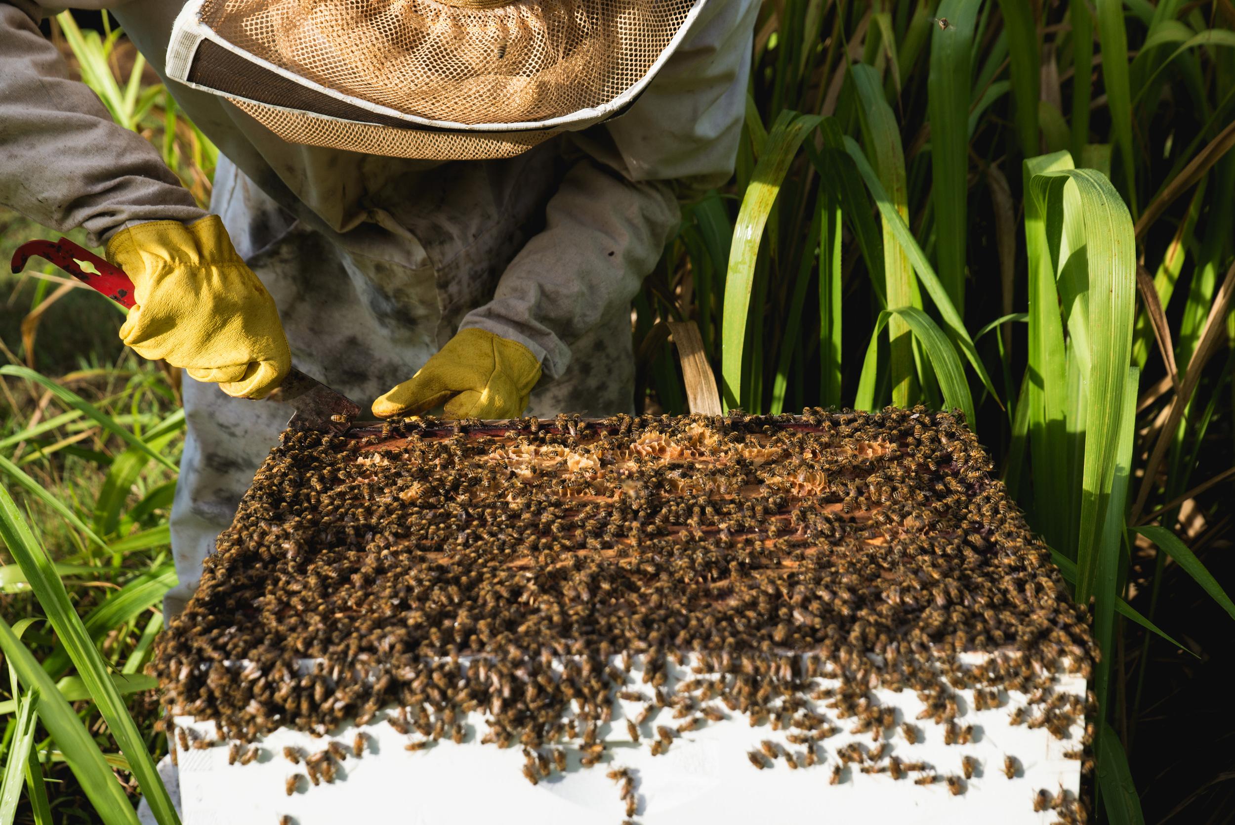 bees-12.jpg