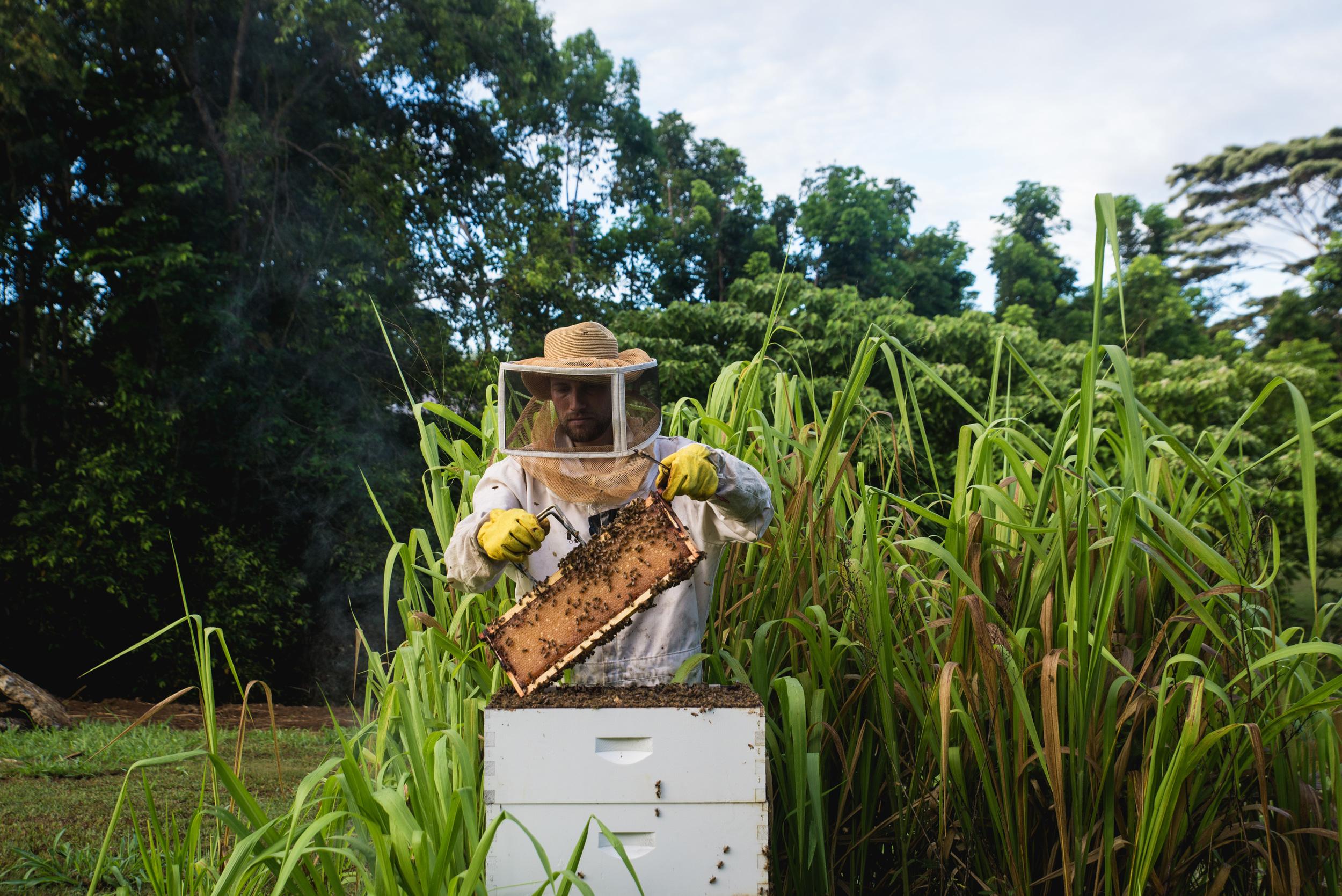 bees-5.jpg