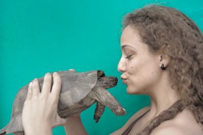 7b07a-turtle.jpg