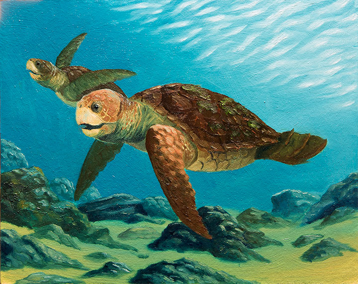 Loggerhead Sea Turtles