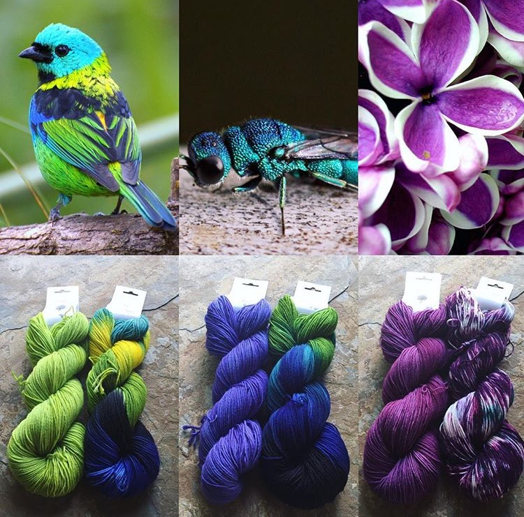 June 2017 Club (left to right) Tanager Green & Green Headed Tanager, Wasp Purple & Cuckoo Wasp, and Lilac Purple & Lilac.