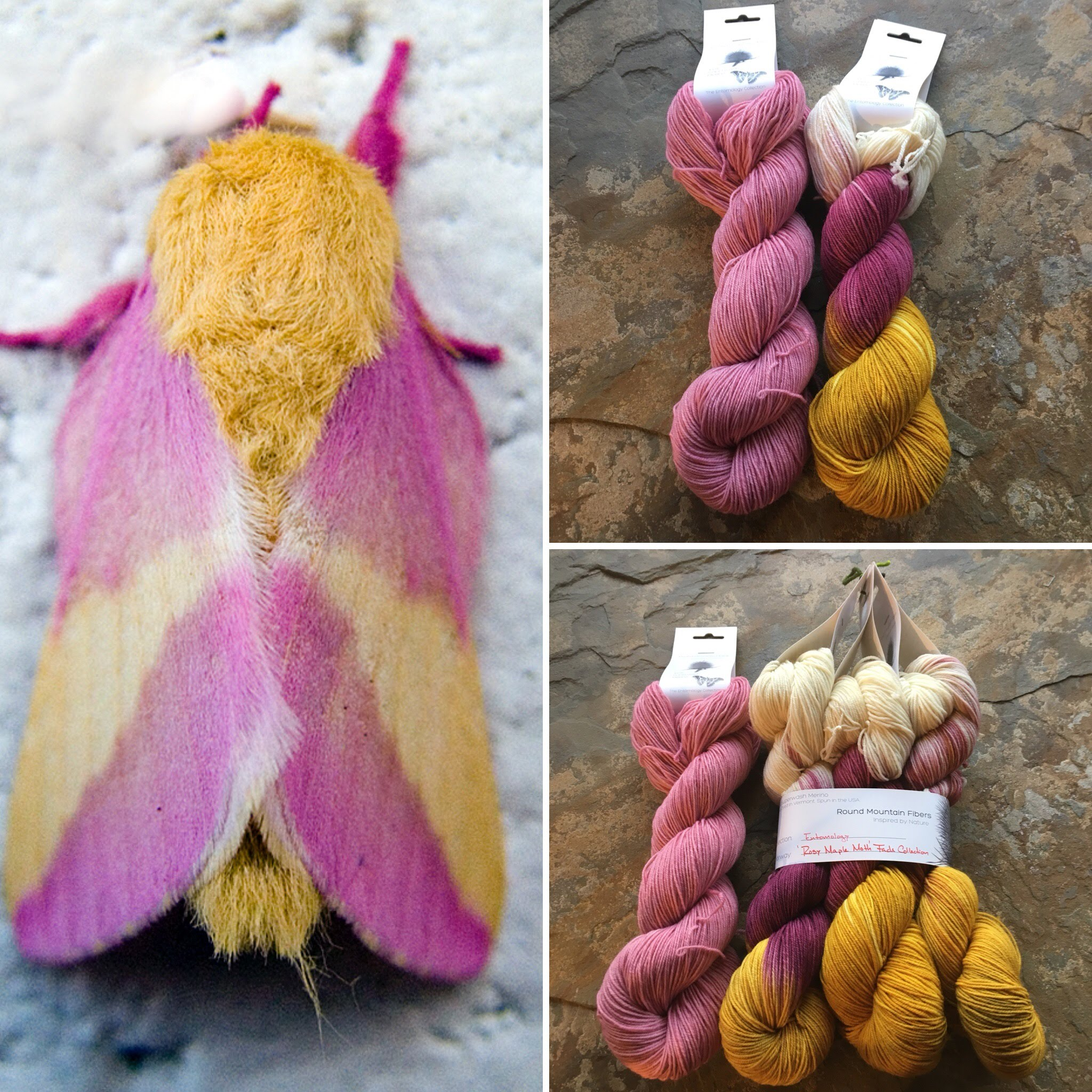 rosy maple moth collage.jpg