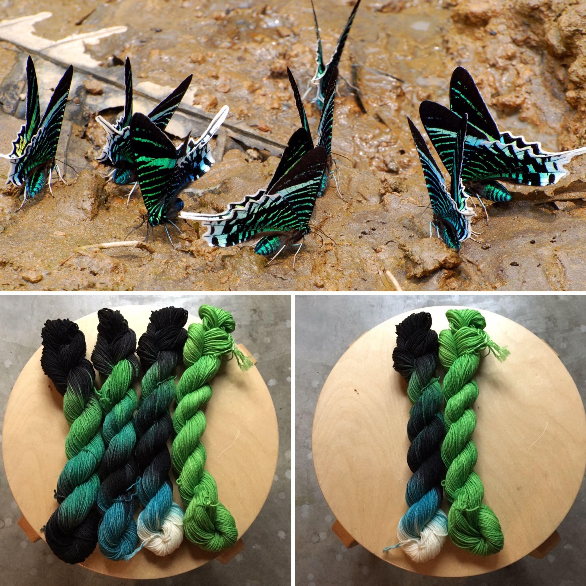 November Entomology Collage.jpg