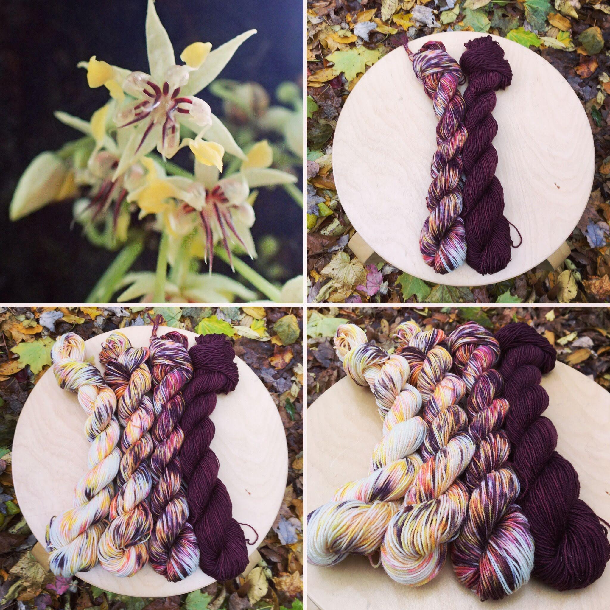 November Botany Club Collage.JPG