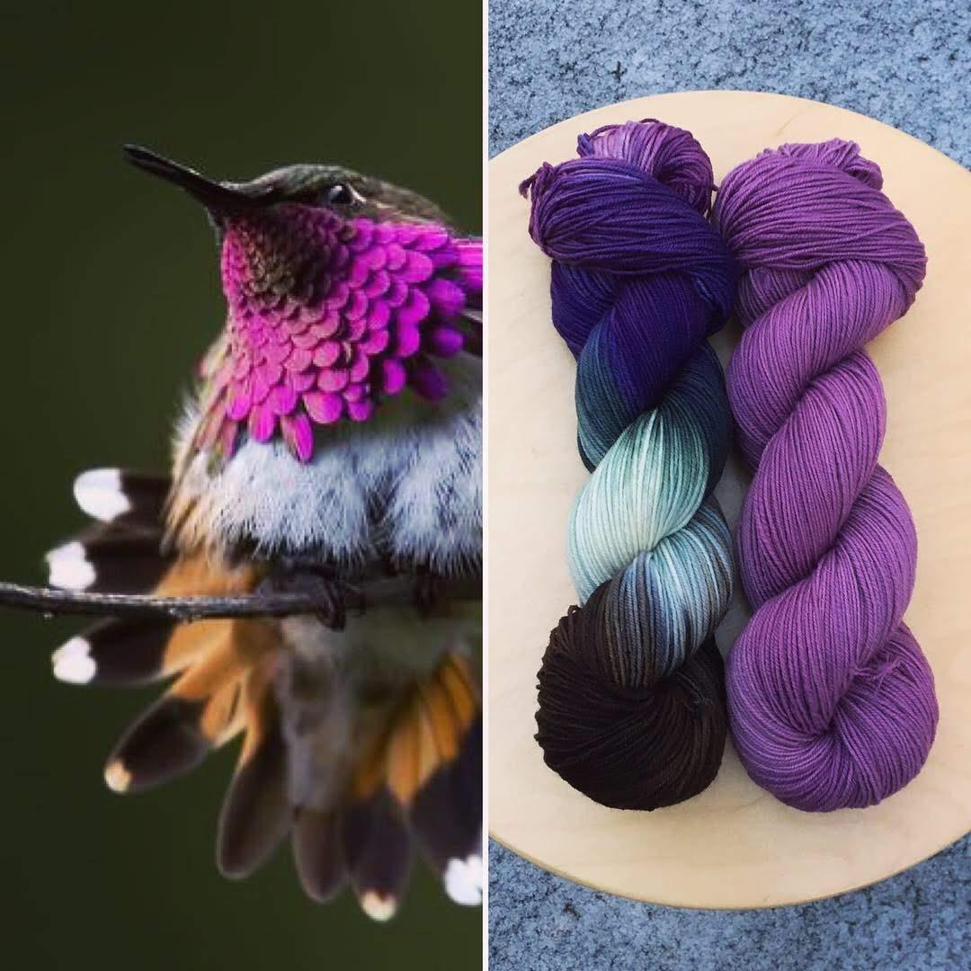 January Ornithology Club Collage.JPG