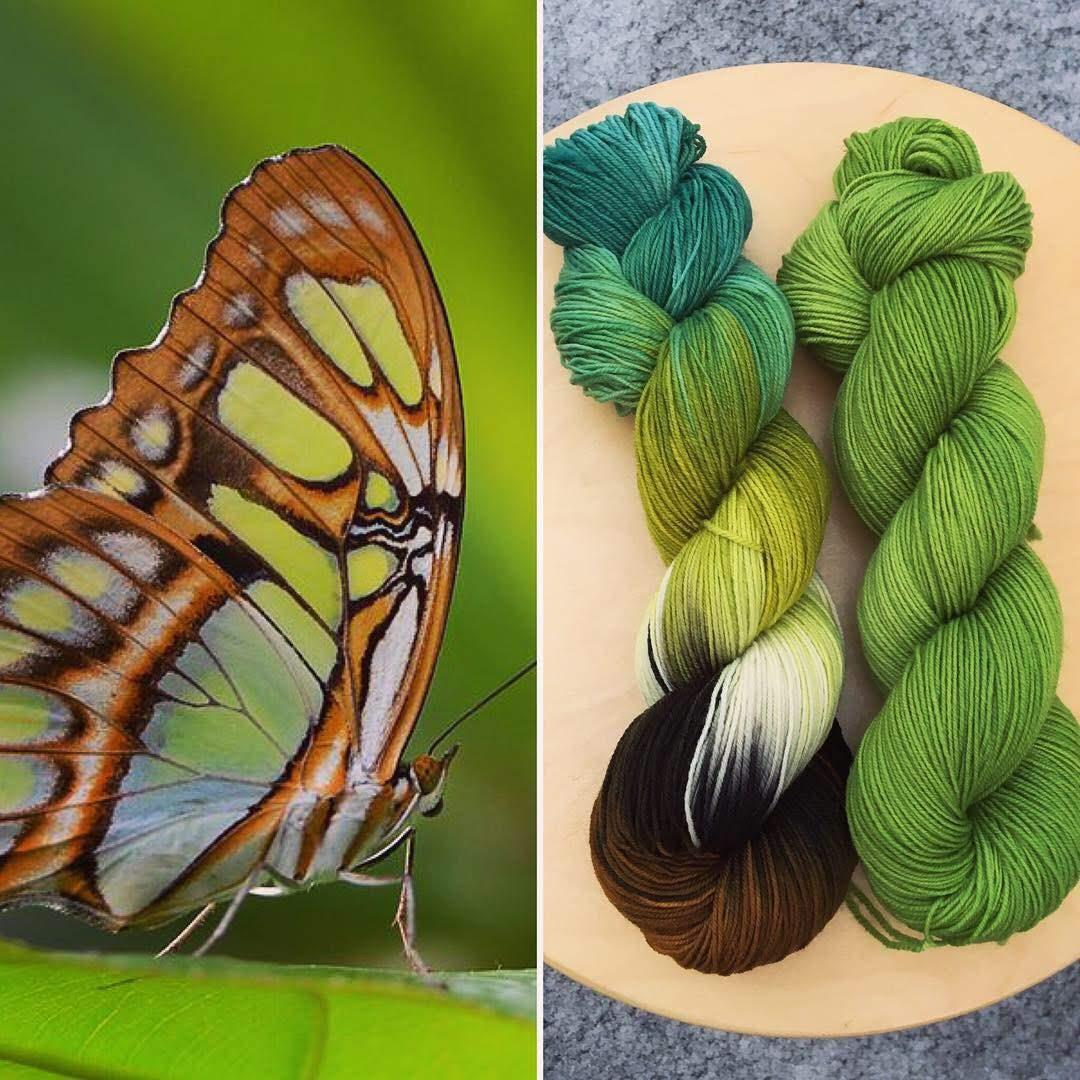 January Entomology Club Collage.JPG