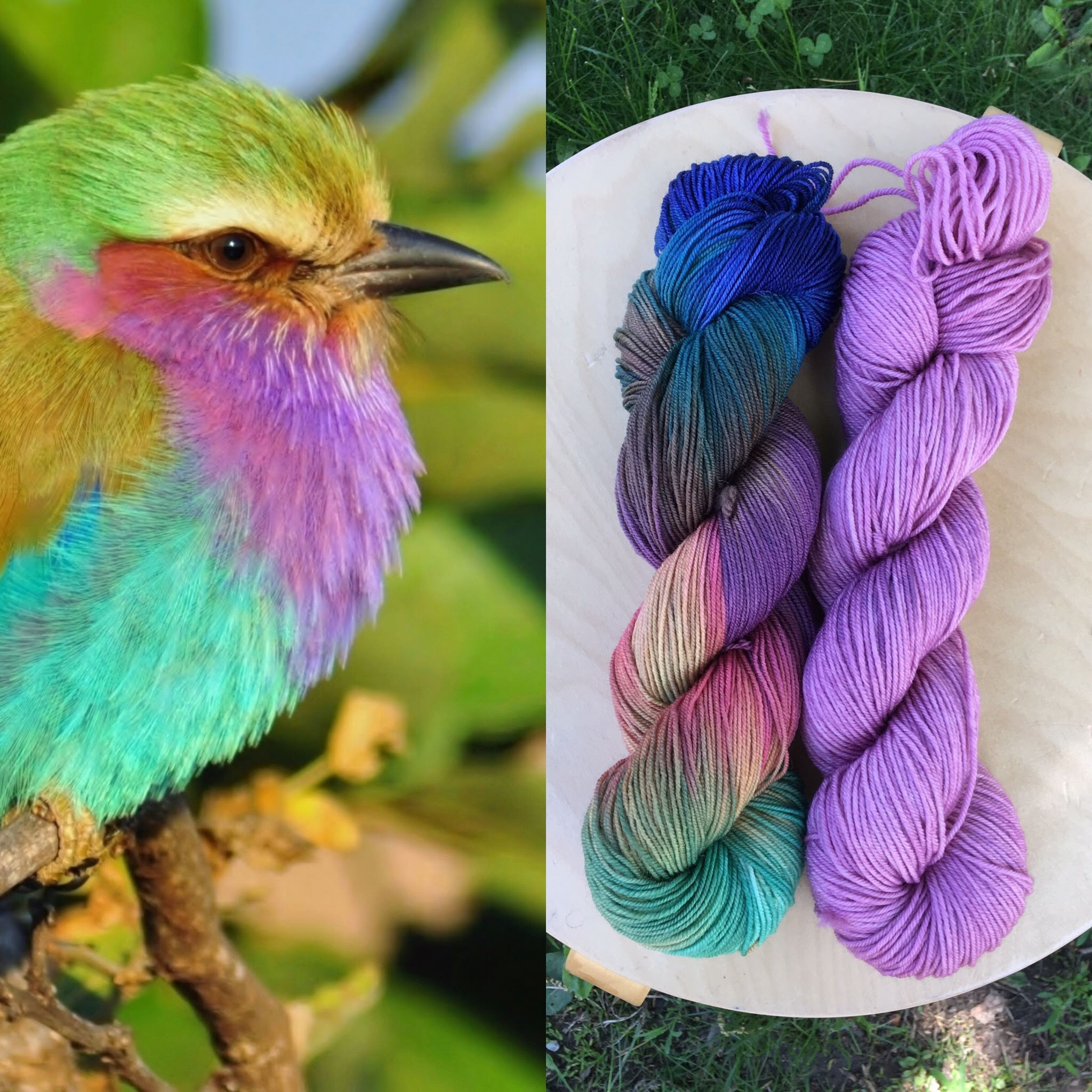 June Ornithology Club. Colorway: Lilac Breasted Roller. Semisolid: Roller Lilac.