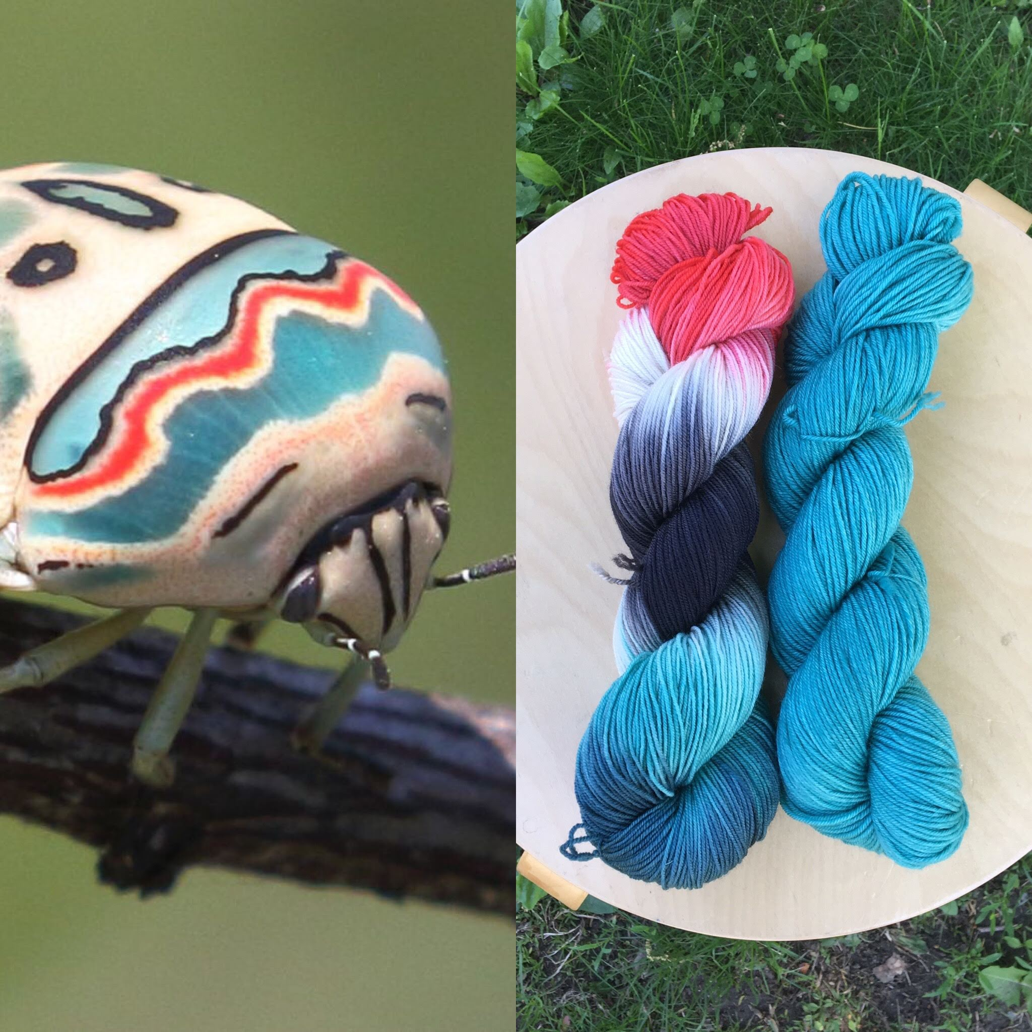 June Entomology Club. Colorway: Picasso Bug. Semisolid: Picasso Bug Blue.
