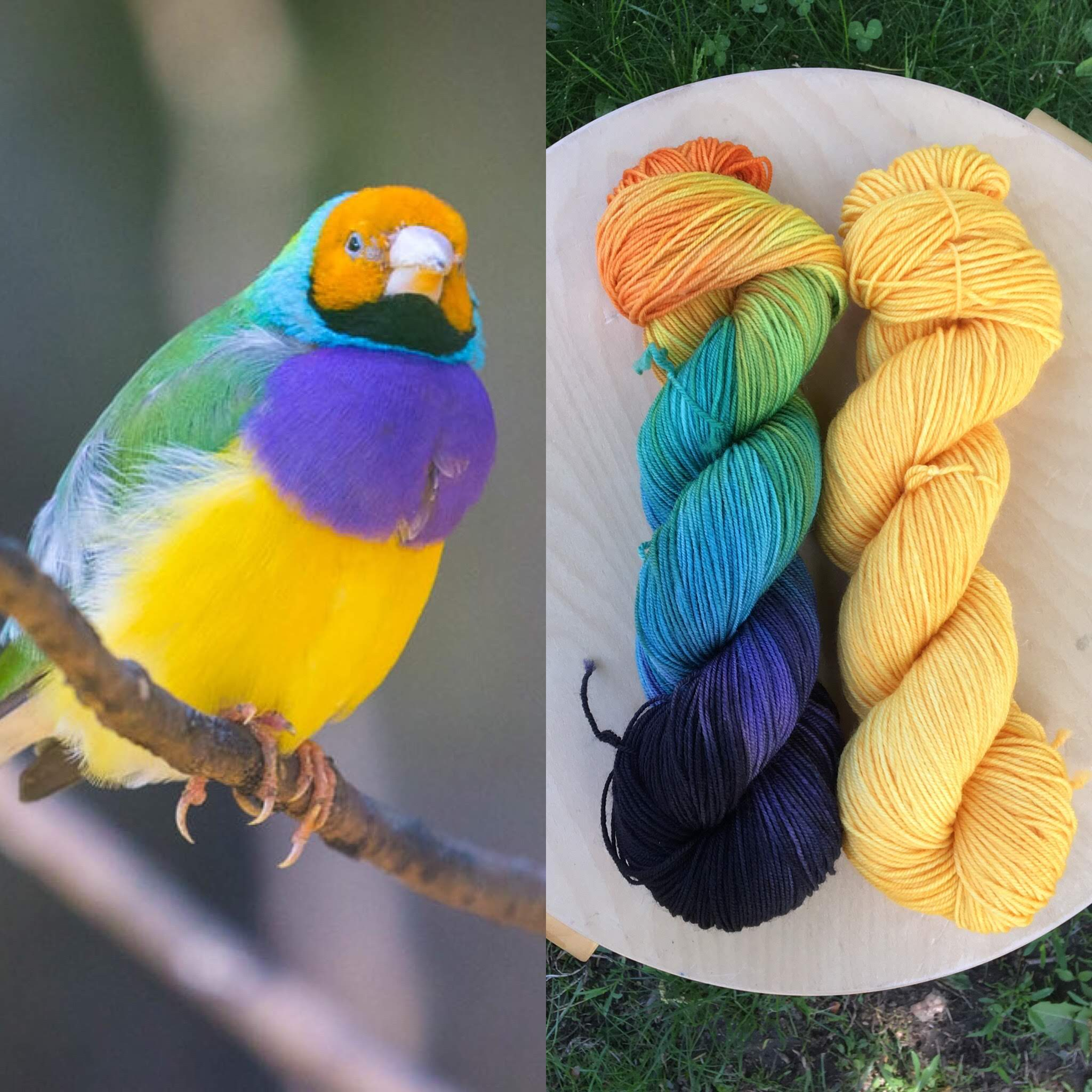 July Ornithology Club. Colorway: Gouldian Finch. Semisolid: Finch Yellow.