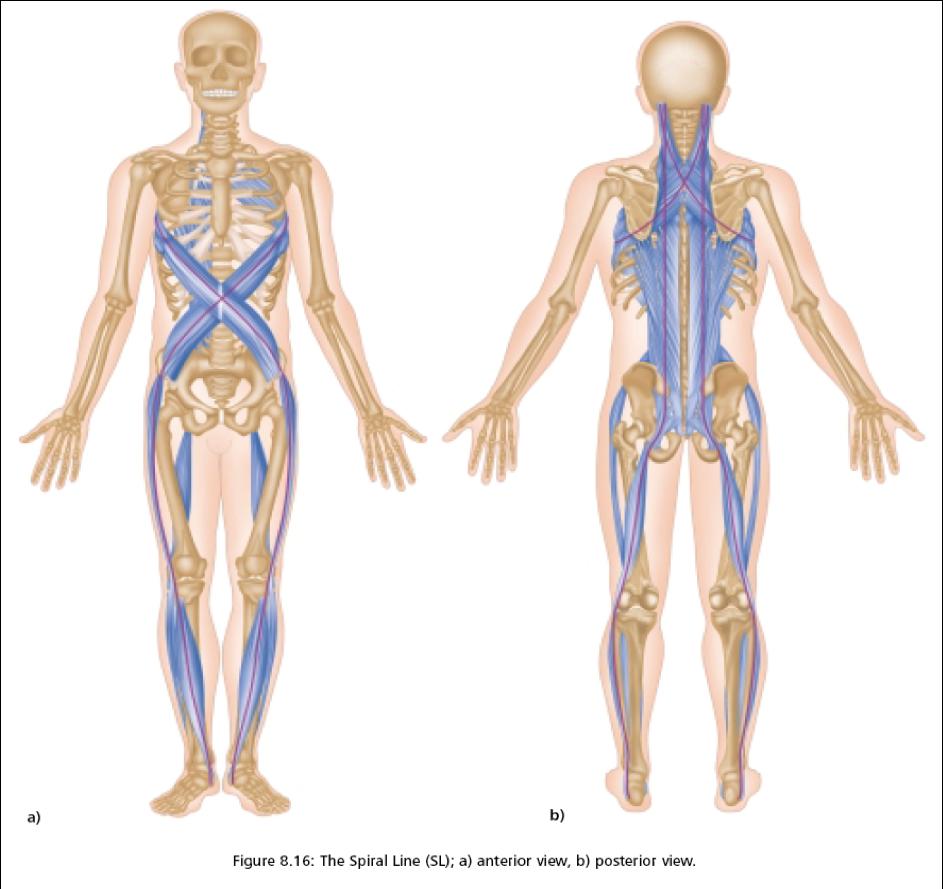 AnatomyTrains.png