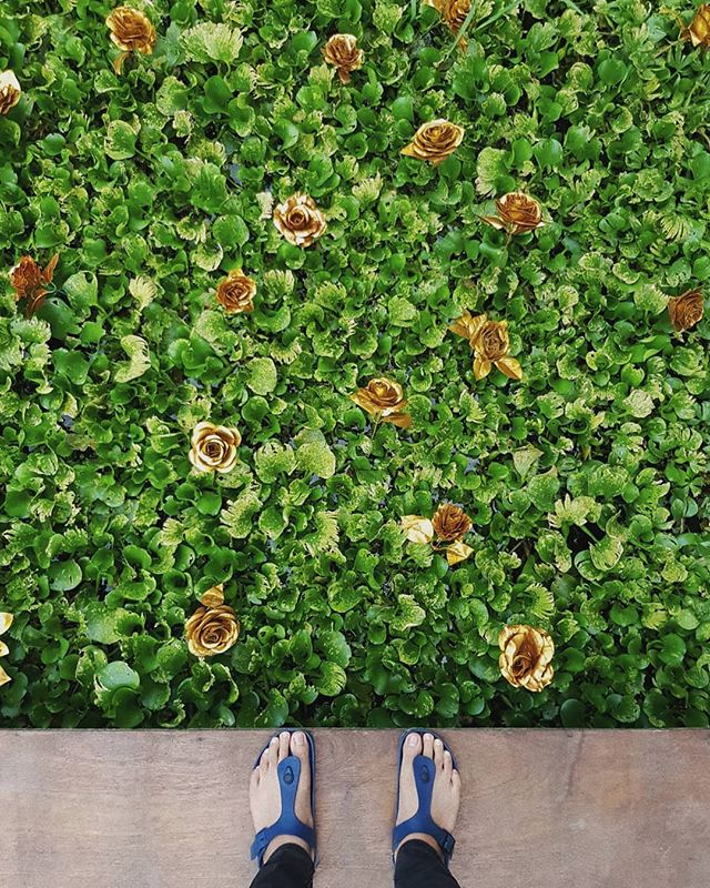 ~ green and gold ⠀ ⠀ I wish everyday can feel like saturday. relaxed yet productive ⠀ ⠀ ⠀ ⠀ ⠀ ⠀ #SamsungSnapshooter #SamsungDeutschland #WHPshapes #fubiz #doyoutravel #tlpicks #archdaily #niche #sdmtravels #tv_pointofview #designboom #hsinthefield #ignantpicoftheday #designmilktravels #HSdailyfeature#symmetricalmonsters #passionpassport #beautifuldestinations #hypeaf #theweekoninstagram#complexphotos #mashpics #designmilk #spaceslike
