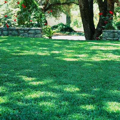 staugustine_grass.jpg