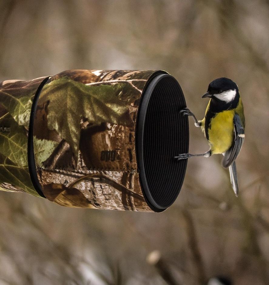 hill-country-birdwatching.jpg