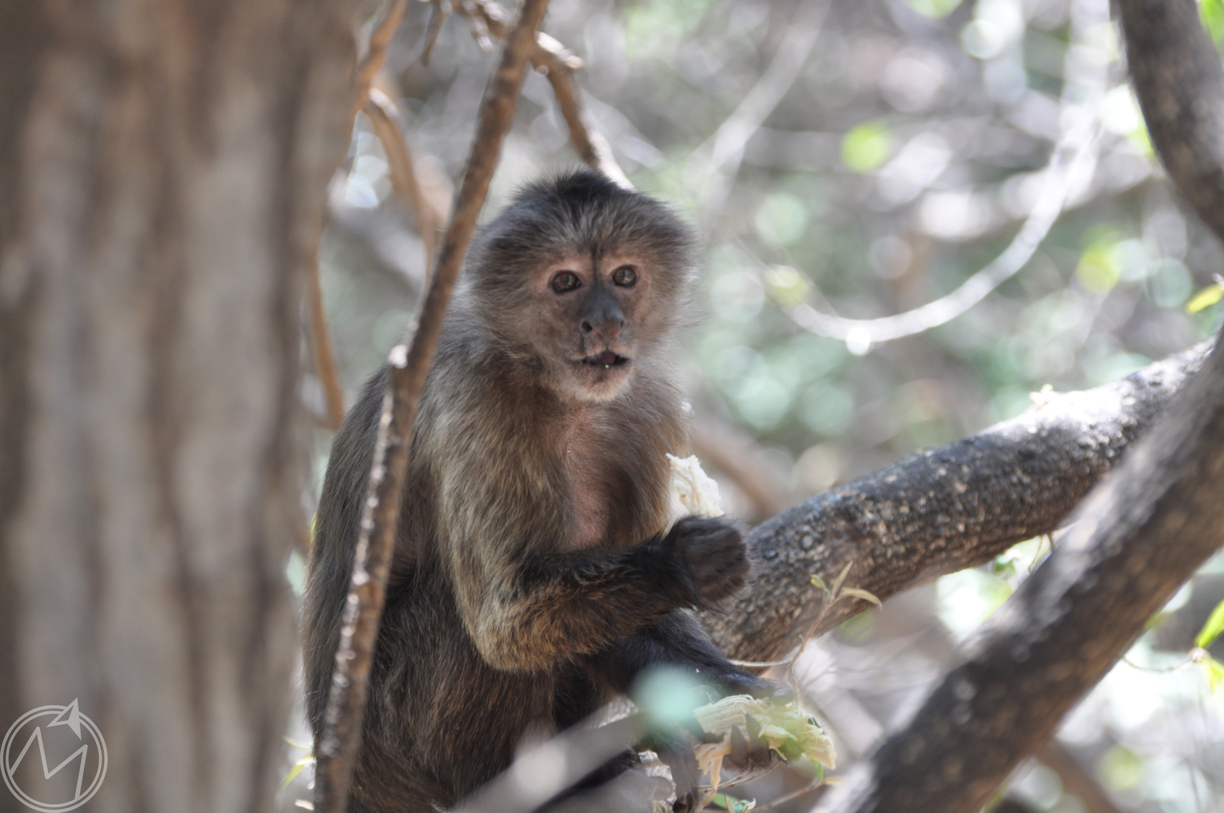 this monkey reminded me so much of a human;it was weird! the facial expressions, noshing on his lunch, his mannerisms. so funny!