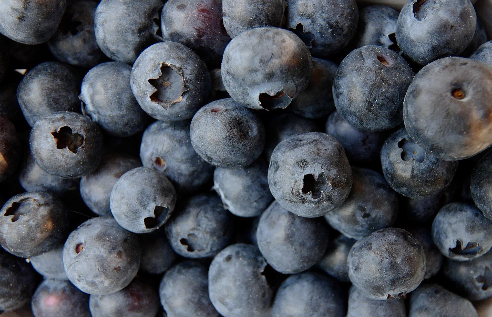 blueberry-3357568_1920.jpg