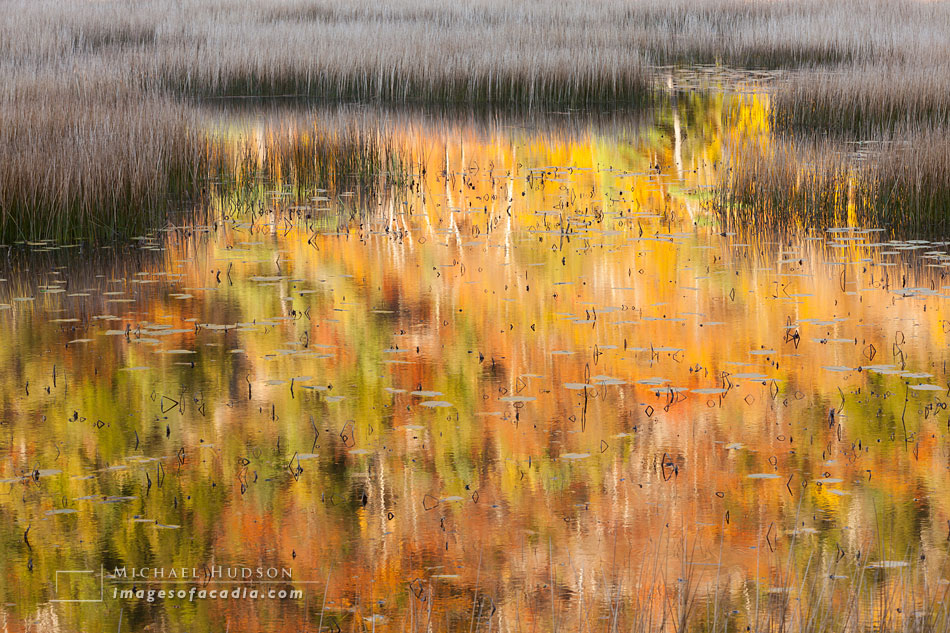 Reeds and Reflections (The Tarn)