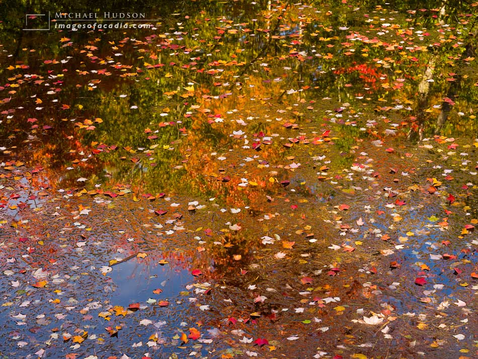 Fallen leaves and reflections in the pond under the footbridge,