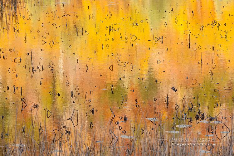 Autumn Abstract, The Tarn, 2013